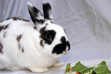 melodynunez pet rabbits