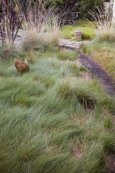 backyard grass alternatives 25 trending grass alternative ideas on pinterest lawn