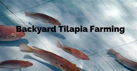 Small Home Tilapia Farm Turn Your Backyard Into A Fish Farm Raise Tilapia At