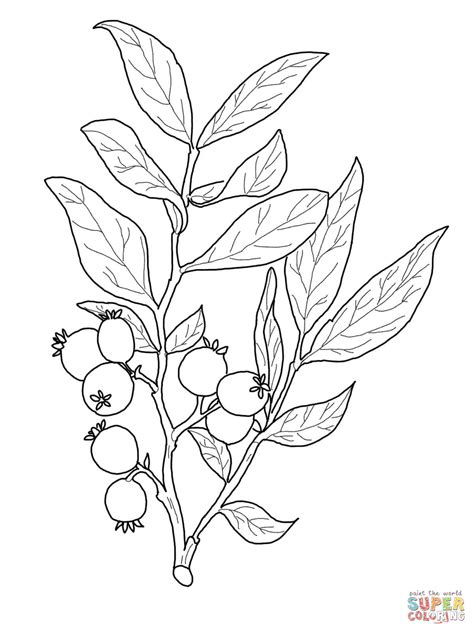 rose bush coloring page bush plant coloring page forum magic hybrid tea rose