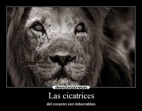 imagenes d leones con frases leones frases imagui