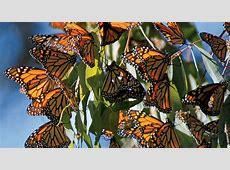 Keeping Monarchs Migrating | Defenders of Wildlife Rocky Intertidal Zones