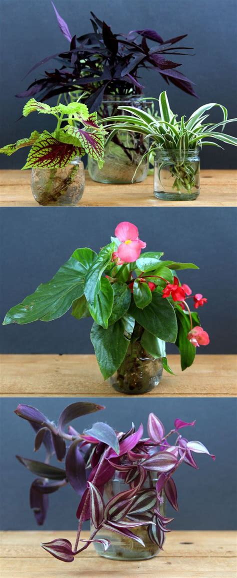 10 Most Beautiful Flowers You Can Grow by Grow Beautiful Indoor Plants In Glass Bottles Page 2 Of