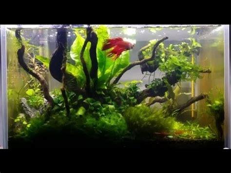 Shrimp Tank Aquascape Amazing Planted Nano Aquarium Betta And Red Cherry