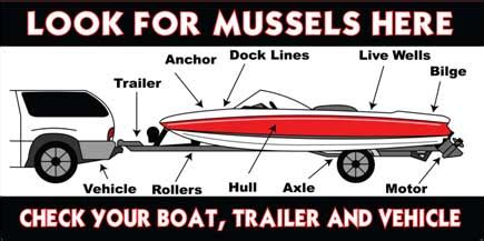 how to remove zebra mussels from a boat quagga zebra mussel prevention program