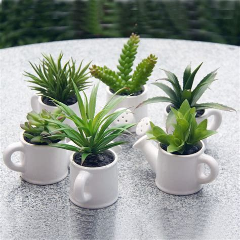 indoor small plants best 25 small cactus plants ideas on pinterest small