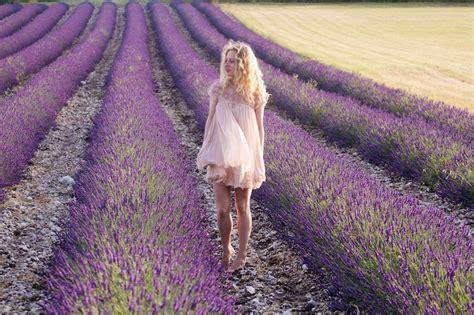 Lavendelfelder Provence by Lavender Fields Provence