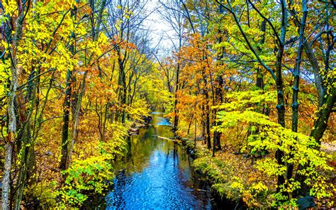bright autumn forest creek wallpapers bright autumn