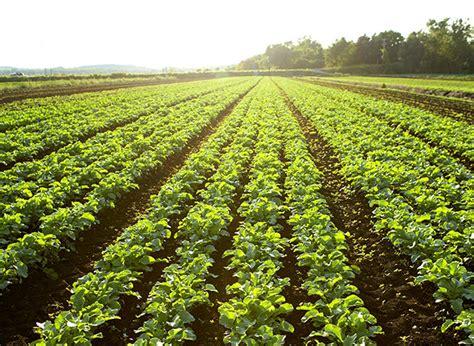 nature food organic food understand organic foods kashi