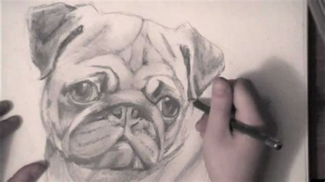 save a pug drawing a pug how to draw litle pups