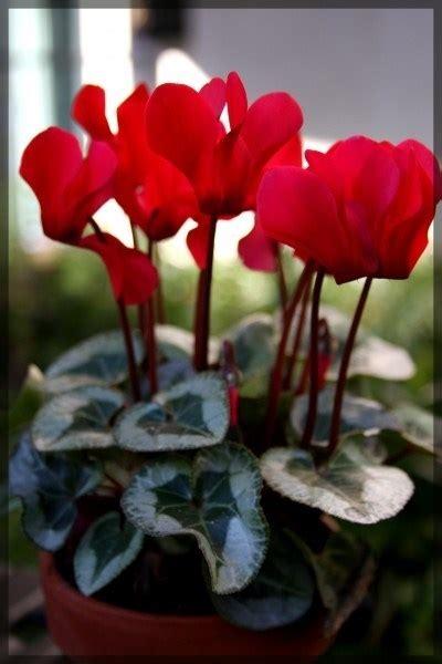 grossi fiori da giardino fiori giardino piante da giardino fiori per il giardino