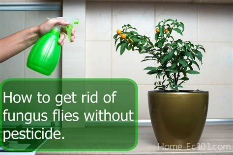 how to get rid of flies in my backyard there s a n unwelcome party in my plants home ec 101