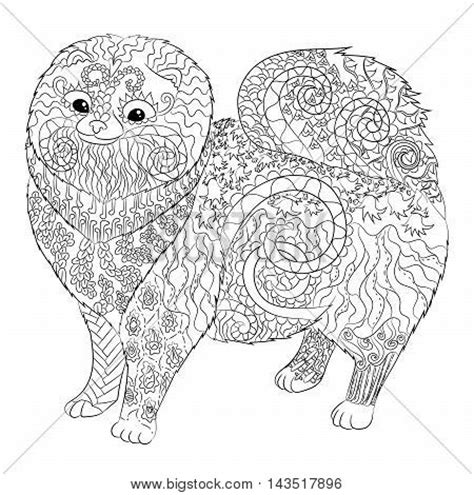pomeranian coloring pages high detail patterned pomeranian vector photo bigstock