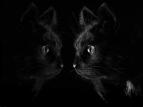 1024x768 black wallpaper download wallpaper 1024x768 black cat look at mirror