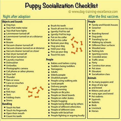 puppy socialization classes near me best 25 service ideas on goldendoodle