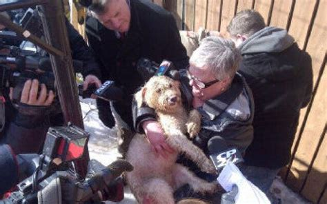 reunited with owner reunited with owner after dramatic rescue from abandoned well toronto
