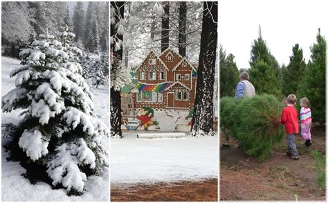 6 sacramento area christmas tree farms to visit this