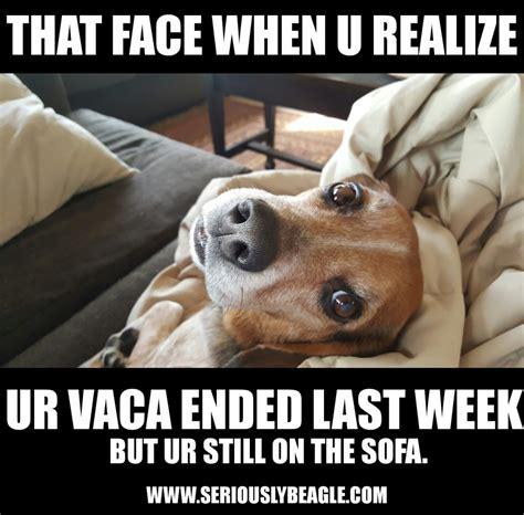 Beagle Meme - memes page 2 seriously beagle
