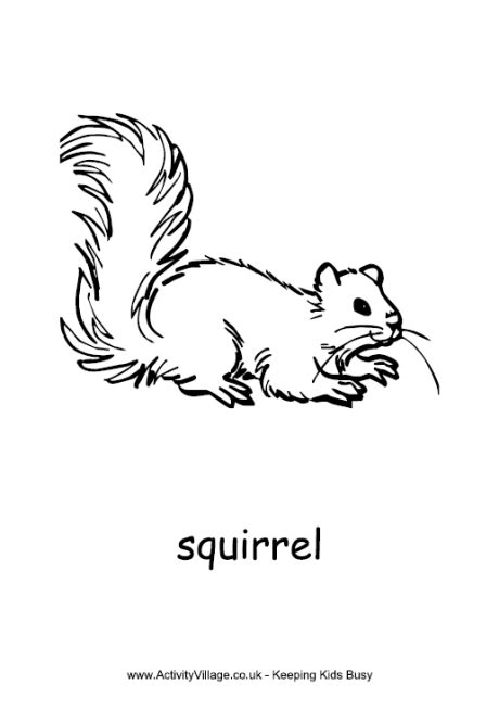 coloring page of a gray squirrel squirrel coloring pages