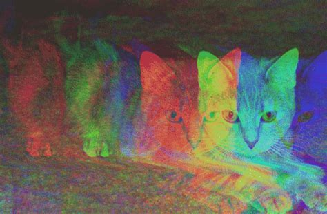 themes para tumblr html hipster hipster cat tumblr themes images pictures becuo cats