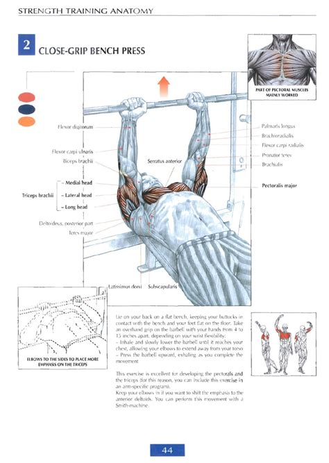 bench press book strength training anatomy review sports science co