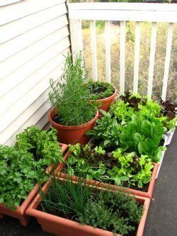 A Container Vegetable Garden Very Easy To Take Care Of Vegetable Garden Care