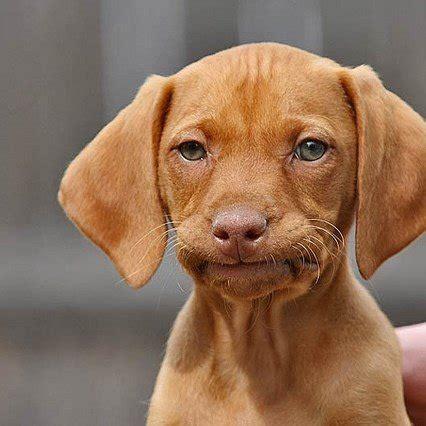 Puppy Face Meme - awkward dog face meme generator
