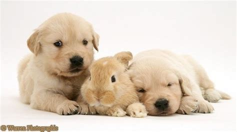 puppies and bunnies real estate and it s all puppies and bunnies the real estate
