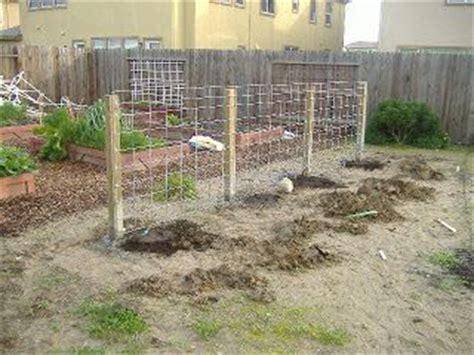 Grape Arbor Plans Sacramento Vegetable Gardening The Sacramento Vegetable Gardening