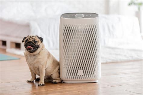 air purifier  pets