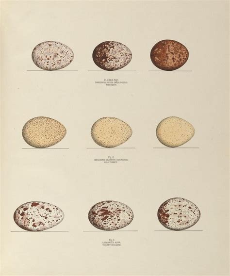 proyectos on pinterest 234 pins illustrations of the nests and eggs of birds of