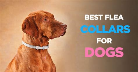 best flea medication for dogs best flea collar for dogs an inexpensive flea and tick treatment