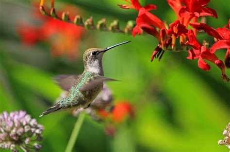 hummingbirds and sphinx moths
