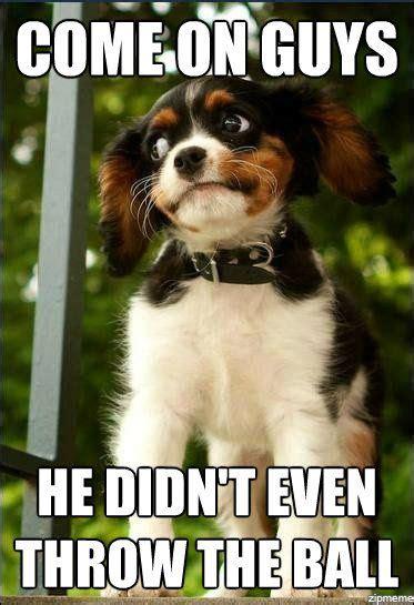 The Dog Meme - dog memes on pinterest
