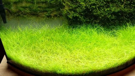 Java moss update   YouTube
