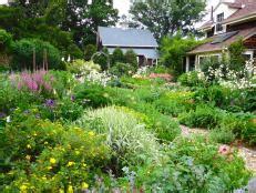 design  tropical garden hgtv