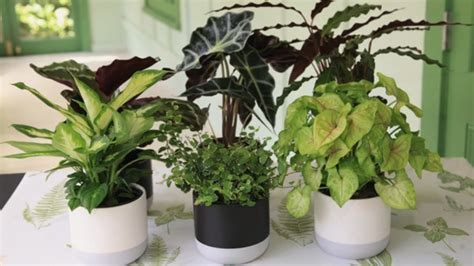 grow indoor plants mitre  easy  garden youtube
