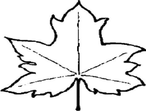 File Leaf Outline Png Wikipedia Outline Pictures