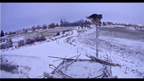 charlo montana osprey nest snowy night    youtube