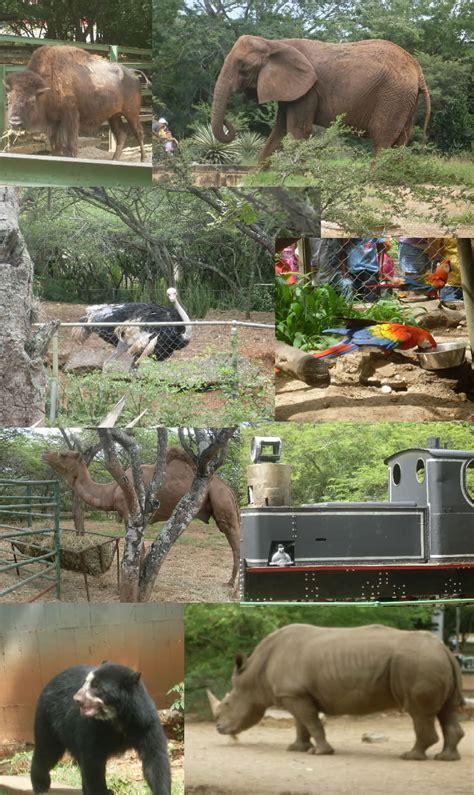 imagenes de animales wikipedia bararida zoological and botanical park wikipedia