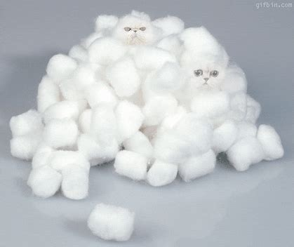 cotton balls gifs find share  giphy