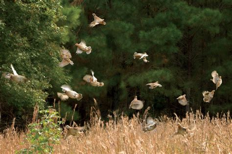 Garden And Gun For Quail Nine Standout Lodges For The Southern Quail