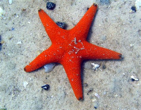 starfish images starfish pictures freaking news