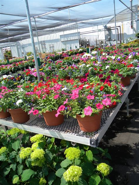 malmborg s garden center and greenhouse nurseries gardening 20045 county rd 81 rogers mn