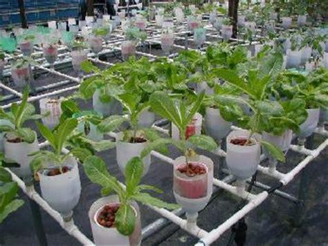 Hydroponic Gardening In The Greenhouse Interior Design Hydroponic Vegetable Gardening
