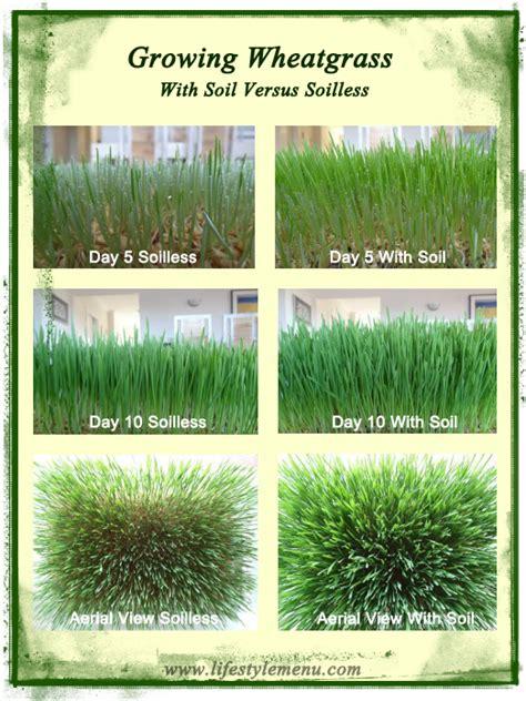 Wellness Wheat Grass pin by southernbellatx on health wellness