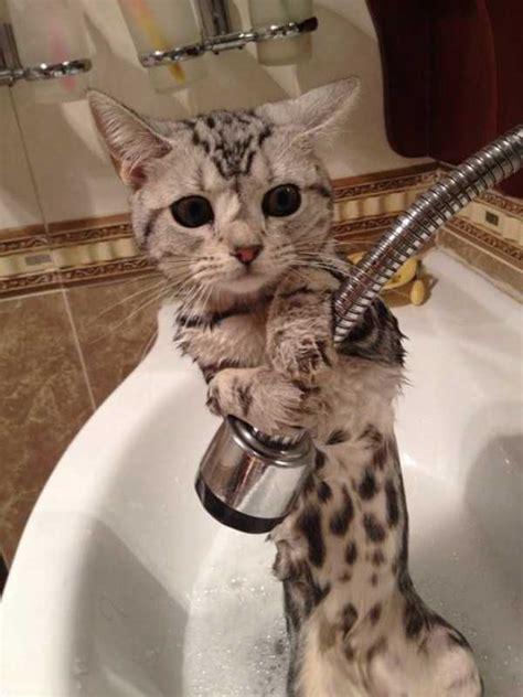 adorable   animals   bath   klykercom