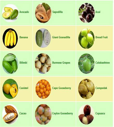 list of fruits list of tropical fruits fruits tropical fruit list