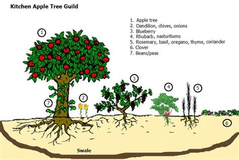 permaculture guilds fruit trees 1000 images about permaculture guilds on