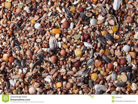mixed seeds stock image image 28484391